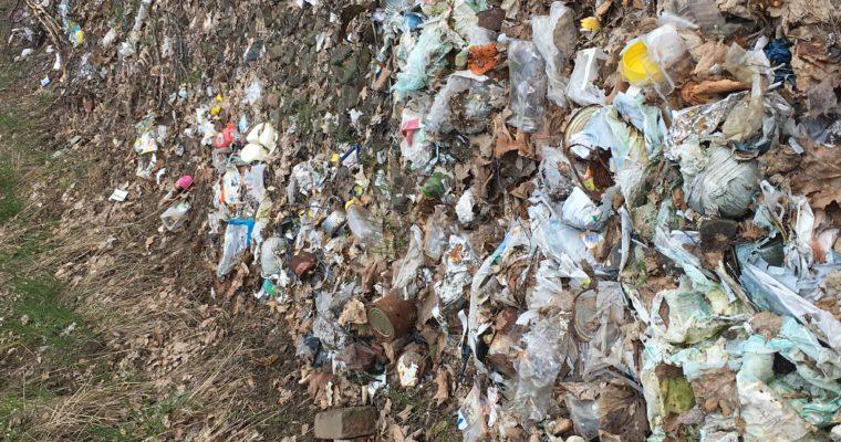 Gemeinsam für eine grünere Welt – Die Müllsammelaktion der 10/2